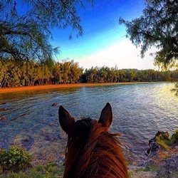 Horse looking out over a body of water