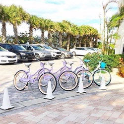 4 bicycles parked together in front of palm trees